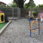 Agility course at Whiskers Nails and Puppy Dog Tails